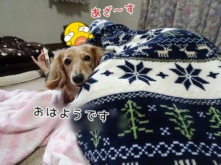 kinako7104.jpg