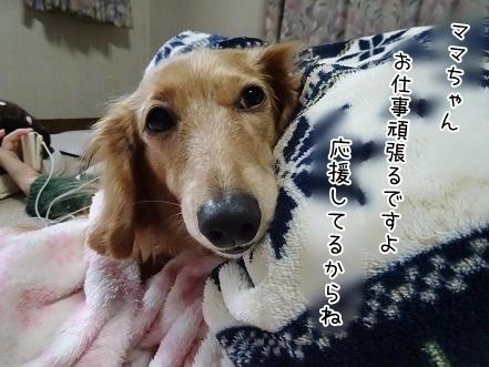 kinako7105.jpg