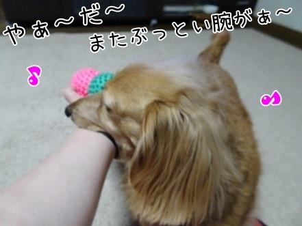 kinako7127.jpg
