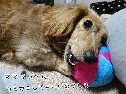 kinako7147.jpg