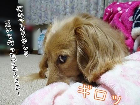 kinako7258.jpg