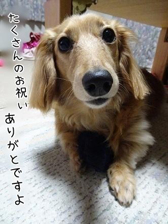 kinako7279.jpg