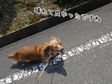 kinako7306.jpg