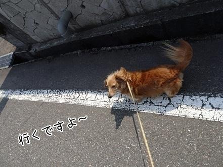 kinako7307.jpg