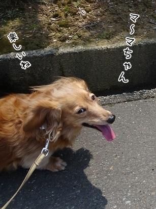 kinako7308.jpg