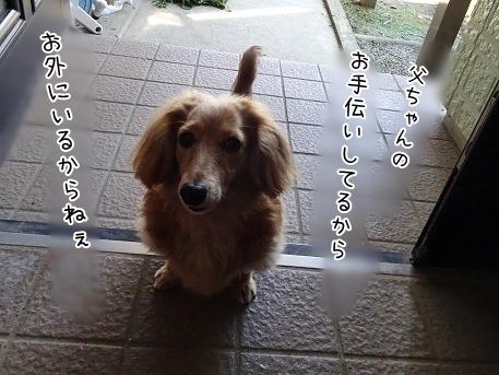 kinako7311.jpg