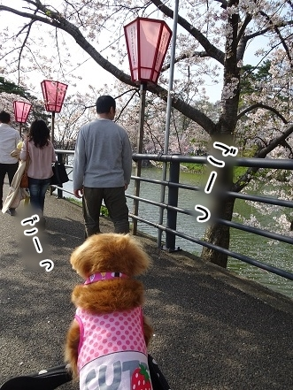 kinako7321.jpg