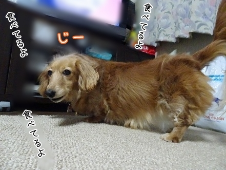 kinako7343.jpg