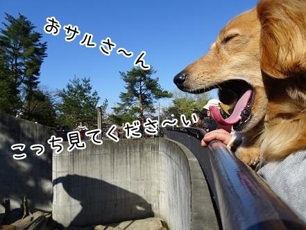 kinako7373.jpg