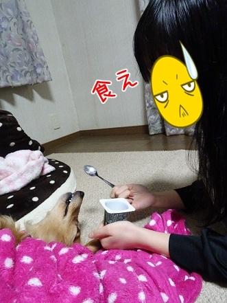 kinako7379.jpg