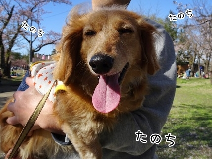 kinako7386.jpg
