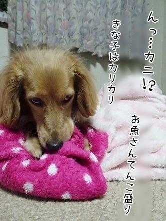kinako7397.jpg