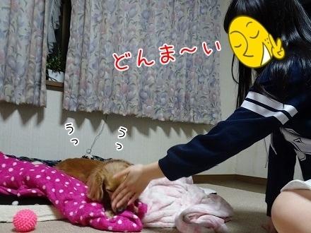 kinako7399.jpg