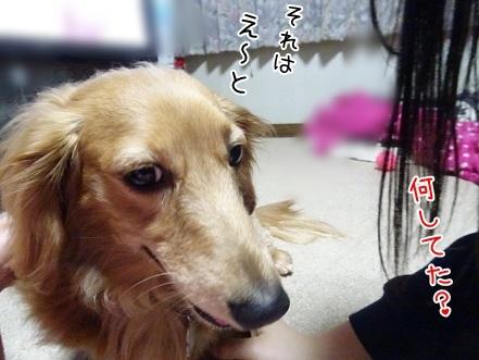 kinako7416.jpg