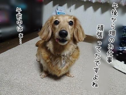 kinako7417.jpg