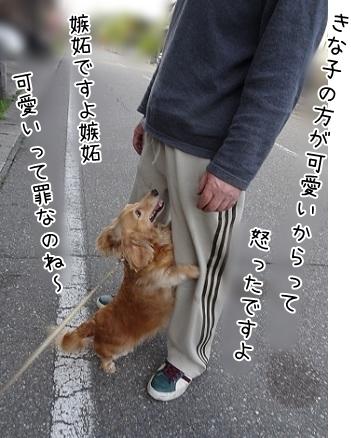kinako7433.jpg