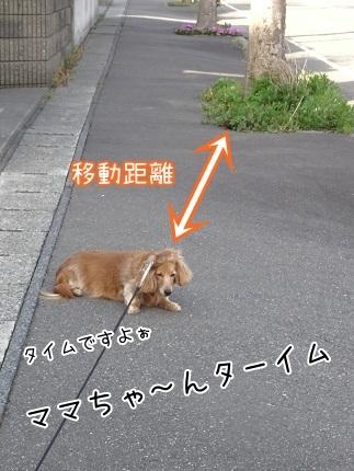 kinako7439.jpg