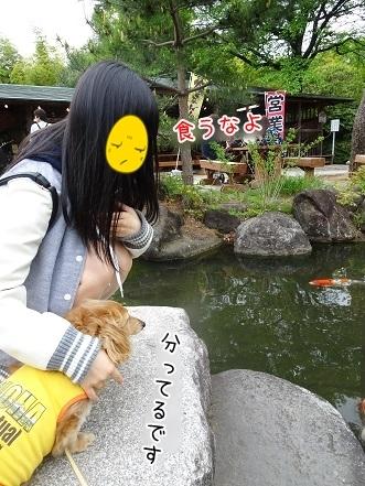 kinako7460.jpg