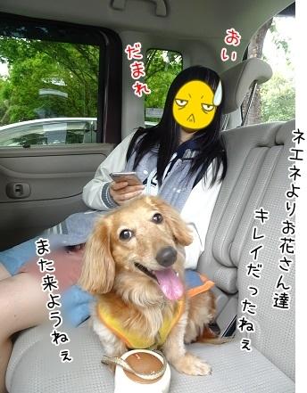kinako7462.jpg
