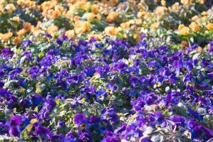あしかがフラワーパークの花たち