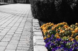 あしかがフラワーパークの花たち2