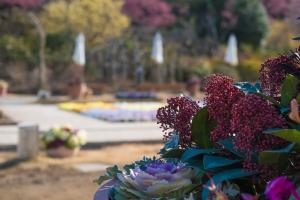 あしかがフラワーパークの花たち3