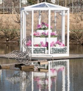 あしかがフラワーパーク水に浮かぶ花2