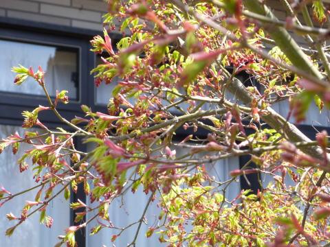 春らしくなりました(3)