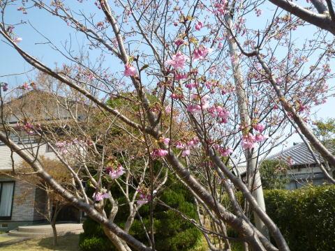 春らしくなりました(4)