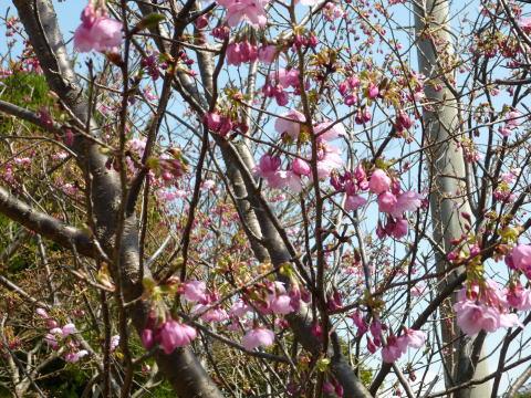 春らしくなりました(5)