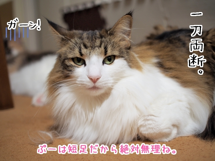 P4150045_1.jpg