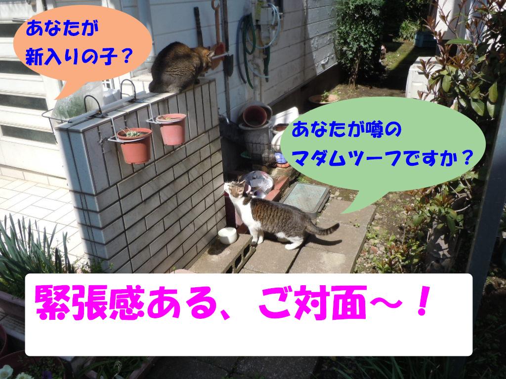新入りしん6-3