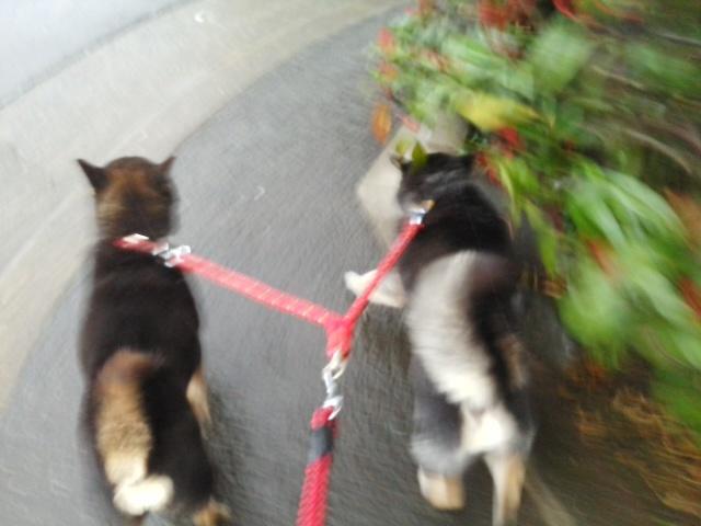 歩いています