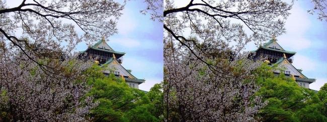 大阪城公園の桜⑥(平行法)