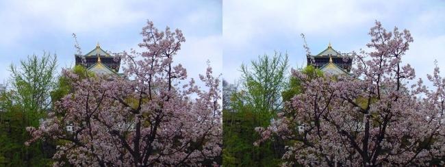 大阪城公園の桜④(平行法)