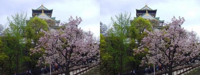 大阪城公園の桜③(平行法)