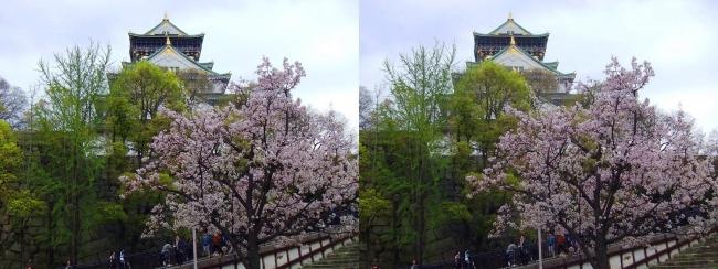大阪城公園の桜③(交差法)