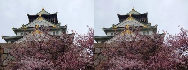 大阪城公園の桜②(交差法)