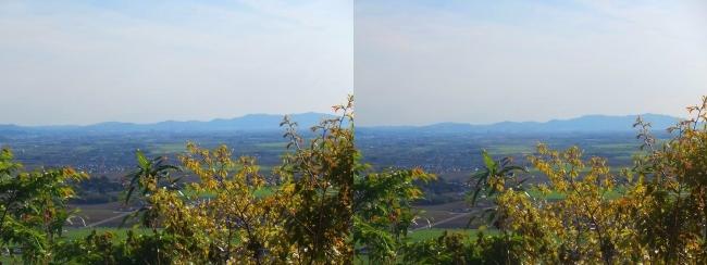 八幡山山頂 西の丸跡⑧(交差法)