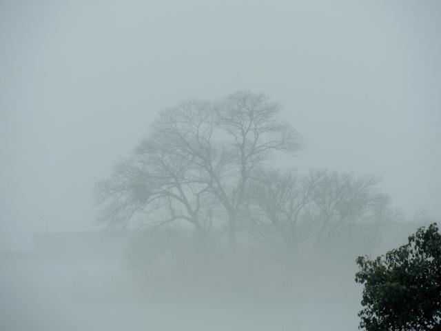 N9213霧のなか