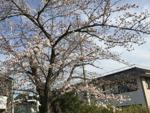 【晴れの高等学校入学式!】・1
