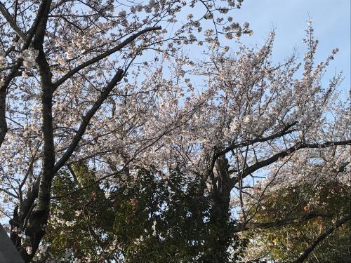 【晴れの高等学校入学式!】・7