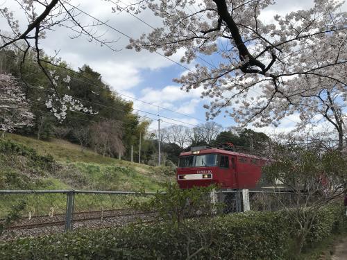 【2017 松ケ岡公園の桜並木】・5