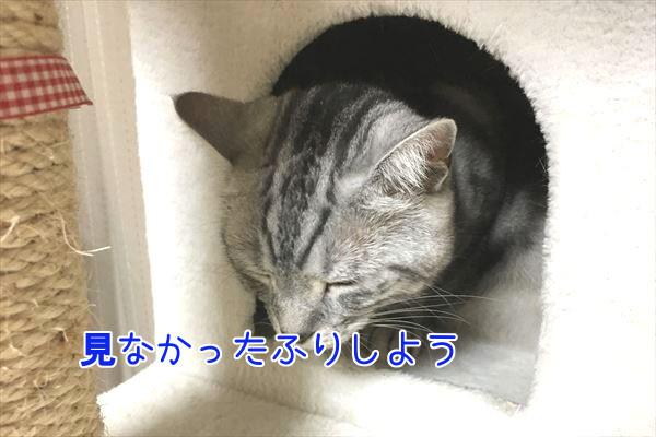 IMG_4094_R.jpg