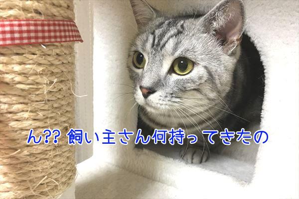 IMG_4095_R.jpg