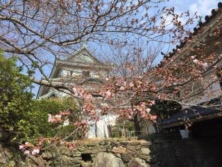 1-IMG_1666和歌山城の桜