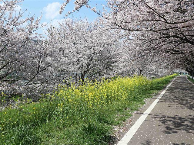 2017 04 13_お花見さんぽ_119_R