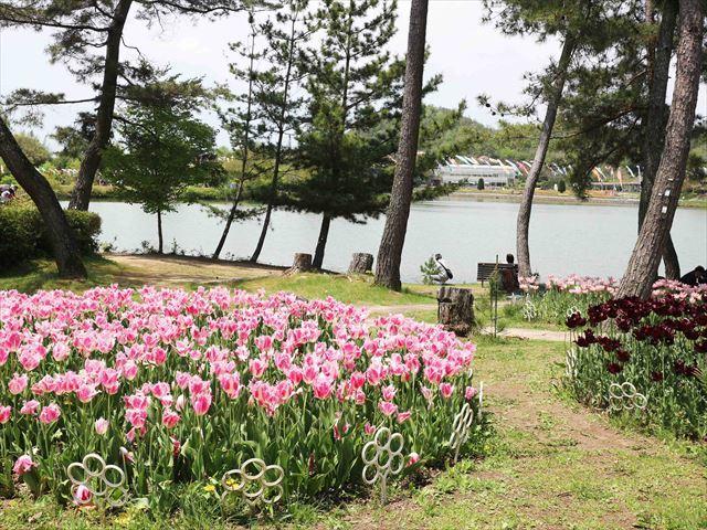 2017 04 29_フラワーセンター_1131_R