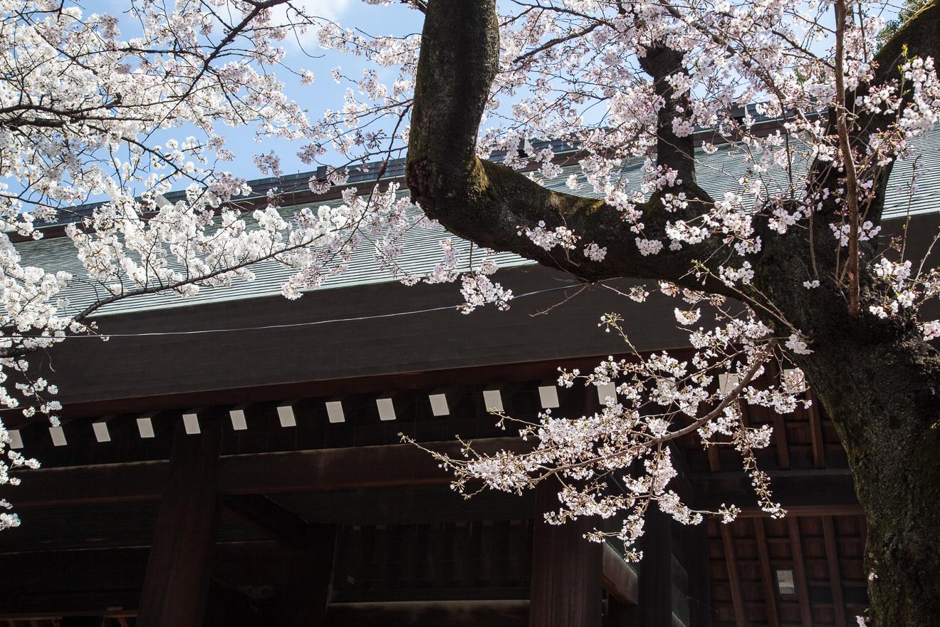 170403靖国神社-1-