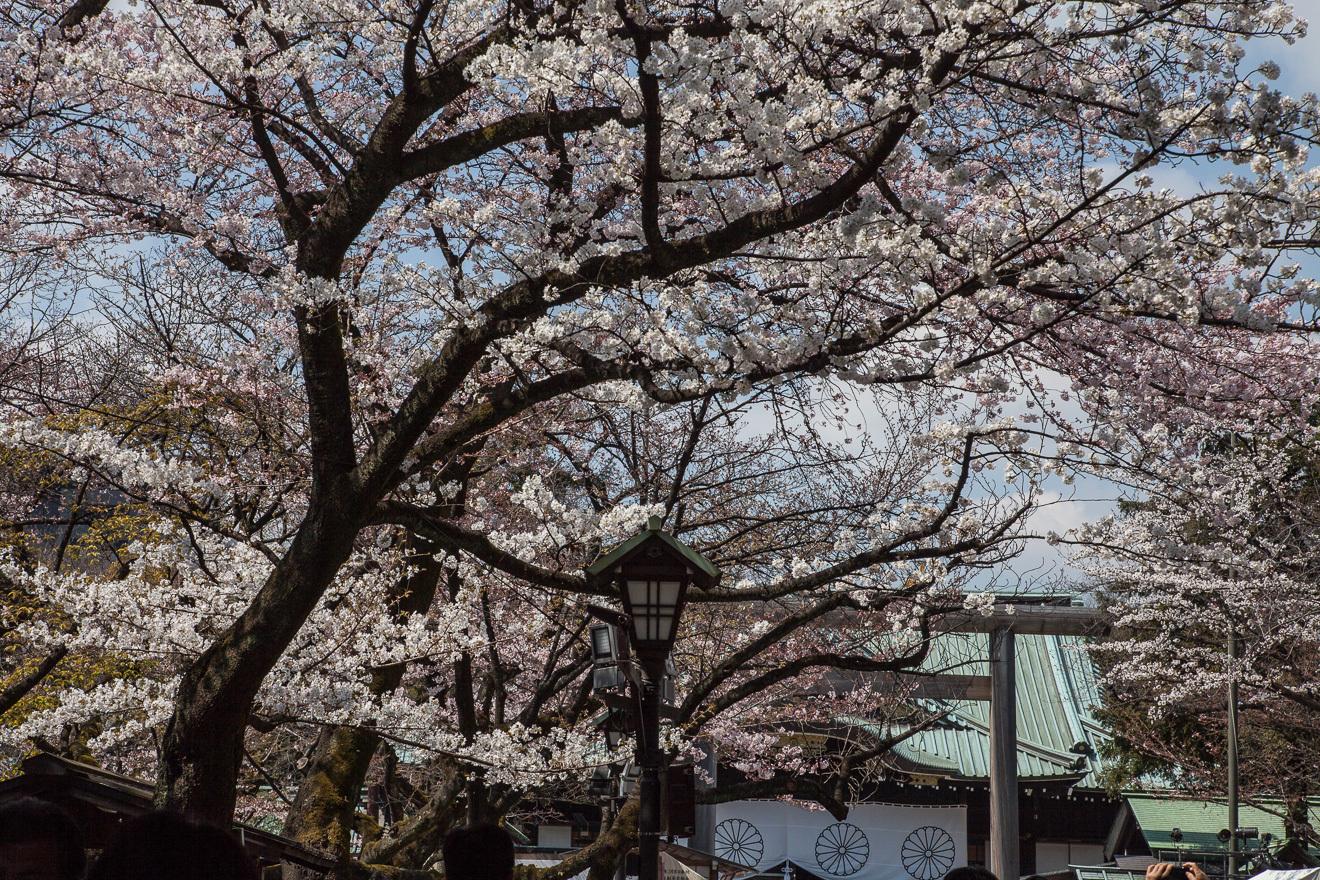 170403靖国神社-1-2